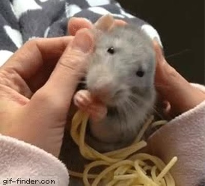 Enlace a Ratatouille en la vida real,