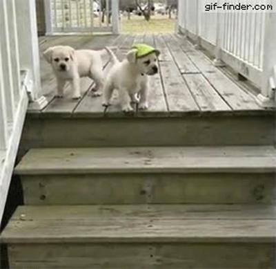 Enlace a Cachorros intentando aprender el arte de subir y bajar escaleras
