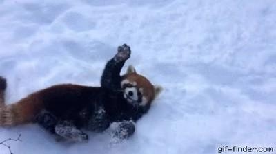 Enlace a Lo que hiciste la primera vez que viste la nieve en persona
