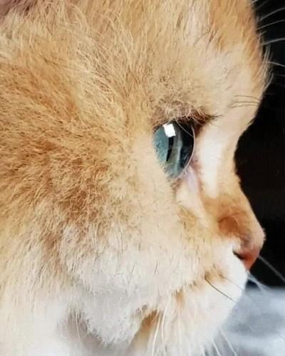 Enlace a El gato con los ojos más bonitos que he visto nunca