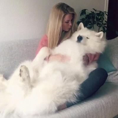 Enlace a Perros tan tranquilos y cariñosos que parecen un peluche