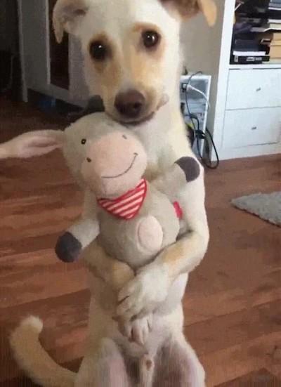 Enlace a Es imposible ser más adorable que este perro
