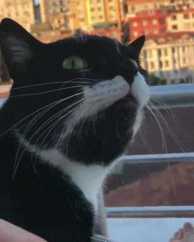 Enlace a Gato.exe ha dejado de funcionar