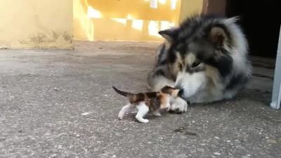 Enlace a Perro con miedo de los gatos pequeños