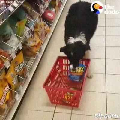 Enlace a Perros que te ayudan a hacer la compra