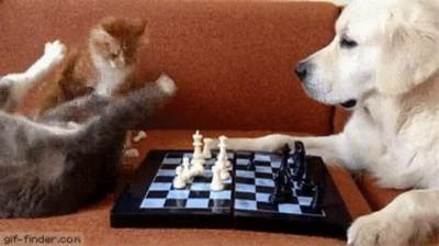 Enlace a La diferencia entre gatos y perros jugando al ajedrez