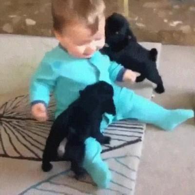 Enlace a Nada más adorable que un bebé jugando con dos cachorros