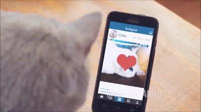 Enlace a Los gatos también utilizan aplicaciones para ligar