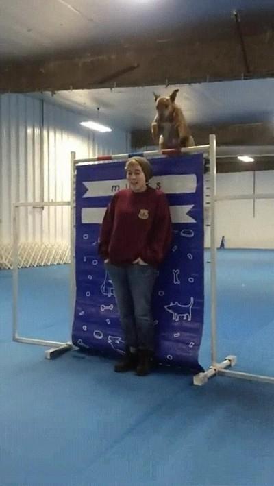 Enlace a Nunca hubiese dicho que un perro era capaz de saltar tan alto