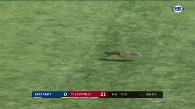 Enlace a Ardilla anotando un touchdown. Por primera vez es la gran estrella