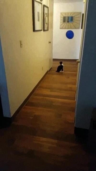 Enlace a Y así se pasa mi gato el día entero