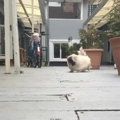 Enlace a Perros que no pueden correr sin ser fabulosos