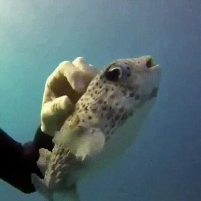 Enlace a Animales marinos que solo quieren un poquito de mimos
