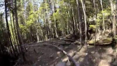Enlace a No hay nada como una montaña rusa en el bosque