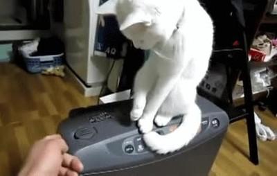 Enlace a Gatos bastante tozudos con el mobiliario de casa