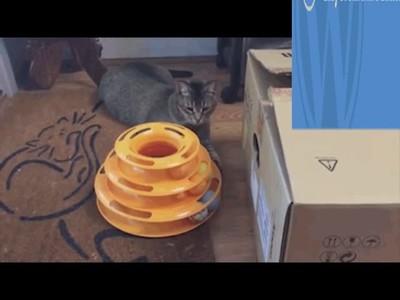 Enlace a Todo el mundo sabe que los gatos pueden estar en el sitio más inesperado