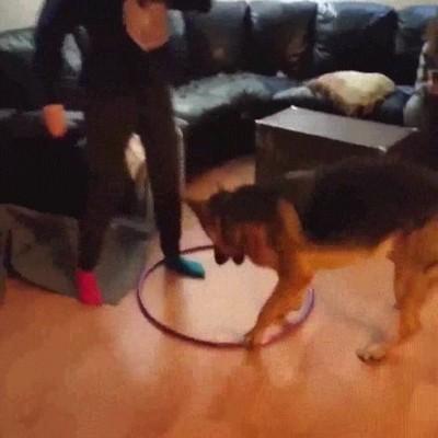 Enlace a Los perros son como los niños. Imitan todo lo que ven
