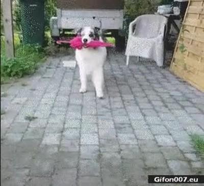 Enlace a La película de Cantando bajo la lluvia recreada por un perro
