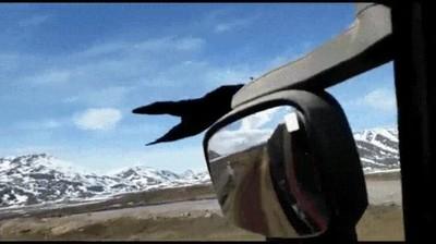 Enlace a Demostración de que los cuervos viajan a la velocidad correcta en Juego de Tronos
