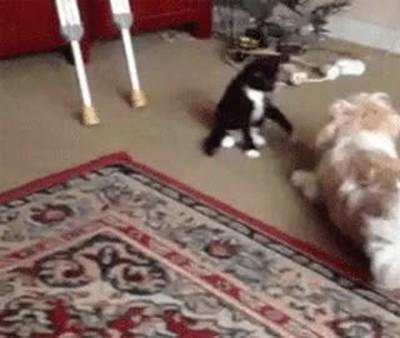 Enlace a Gatos que aprovechan cualquier situación para hacerse con el mando de la situación