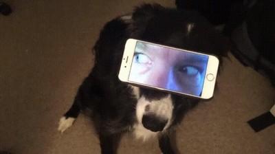 Enlace a Daría bastante mal rollo que los perros tuviesen ojos humanos