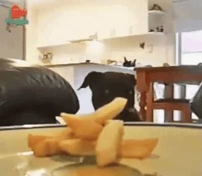 Enlace a Perros con técnicas sutiles para robar y nunca ser pillados