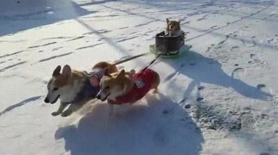 Enlace a Perros disfrutando del primer día de nieve de la temporada,