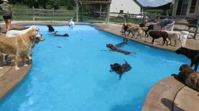 Enlace a Perros que también organizan fiestas en la piscina
