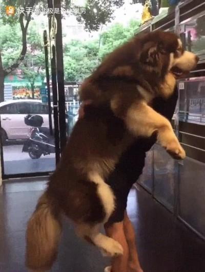 Enlace a Perros que se siguen comportando como un cachorro