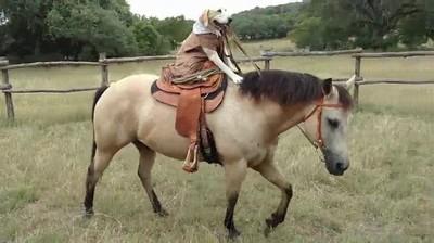 Enlace a El perro que montaba a los caballos