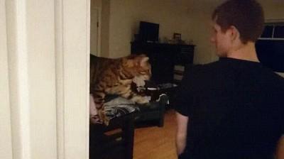 Enlace a Gatos que solo quieren un poco de atención
