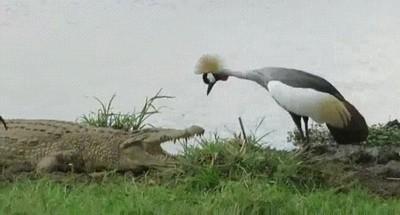Enlace a Aves sin miedo a nada en la vida