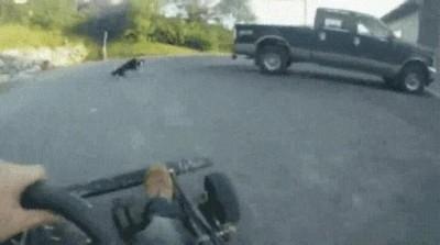 Enlace a Perros que van a la velocidad de la luz