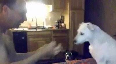 Enlace a Perro confundido después de un truco de magia