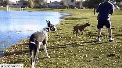 Enlace a Perros que usan trucos y activan el Modo Dios en la vida real