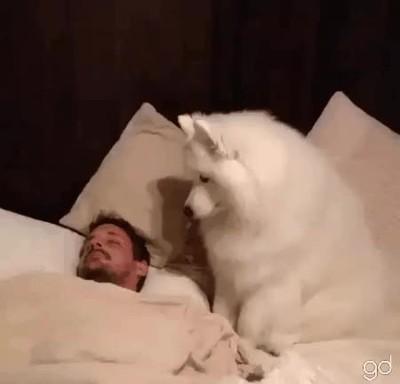 Enlace a No hay mejor despertador que un perro cariñoso