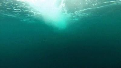 Enlace a Orca alcanzando la velocidad de un barco sin apenas esfuerzo
