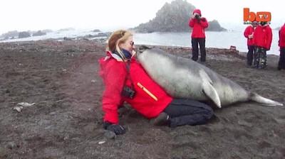 Enlace a Elefantes marinos que solo piden un poco de mimos