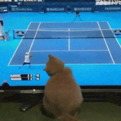 Enlace a Gatos que fueren tenistas profesionales en otra vida