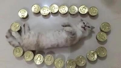 Enlace a Así es el paraíso de los gatos