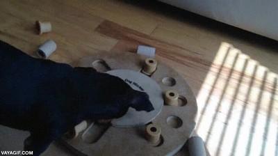Enlace a Perros inteligentes a la hora de comer