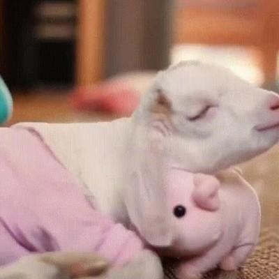 Enlace a Durmiendo en compañía de su peluche favorito