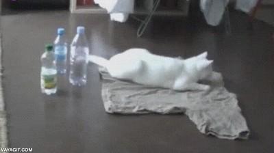 Enlace a Gatos que se asustan por cualquier cosa