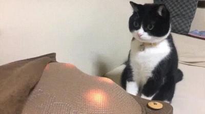 Enlace a Gatos que se quedan flipando con las nuevas tecnologías