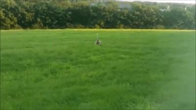 Enlace a Gatos jugando como si fuesen perros