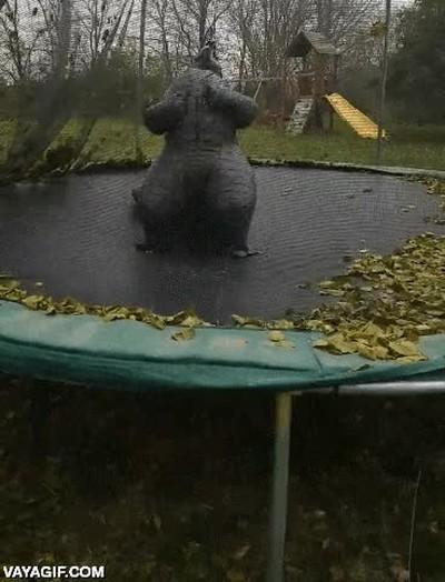Enlace a Lo que le pasa a Godzilla cuando se pone en plan King Kong