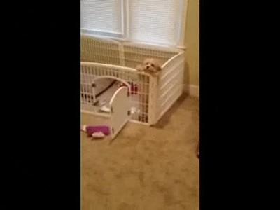 Enlace a Perros que creen que usar puertas es de losers
