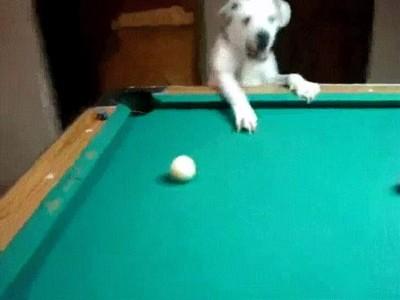Enlace a Asúmelo. Perderías una partida de billar contra este perro