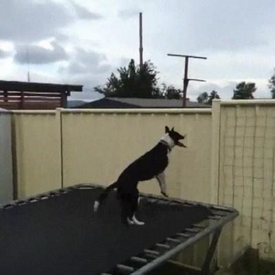 Enlace a Perros que siempre quieren comprobar los alrededores de casa