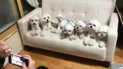 Enlace a Cuando juntas a todos tus hermanos de cuatro patas para una foto de grupo